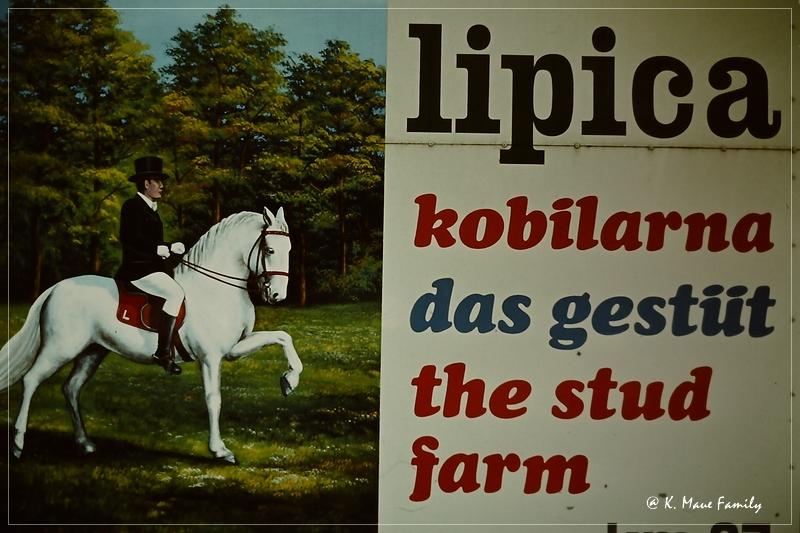 Austria+Jugoslawien_1980_22.jpg