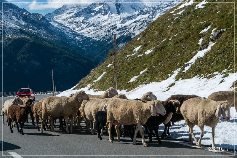 Alpen_2020_599.jpg